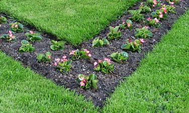 Bepflanzungen Tipps - Hausundgarten-muenchen.de