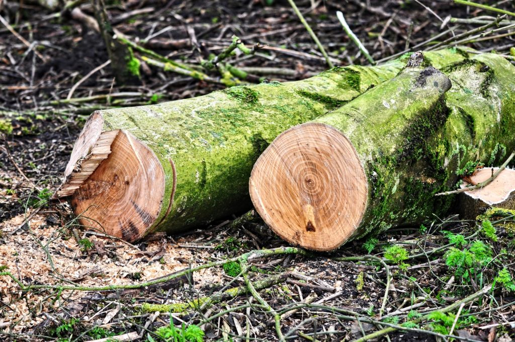 Bäume Fällen Bis Wann Erlaubt
