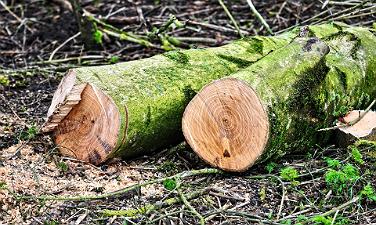 Wann ist Baumfällung erlaubt? Tipps - Hausundgarten-muenchen.de