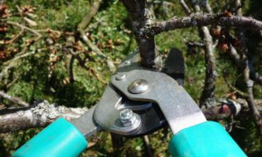 Obstbäume schneiden Tipps - Hausundgarten-muenchen.de