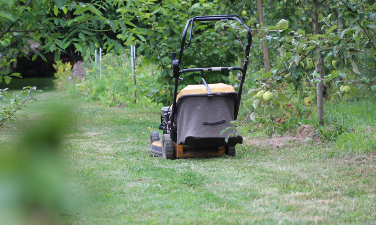 Rasenpflege im Frühjahr Tipps - Hausundgarten-muenchen.de