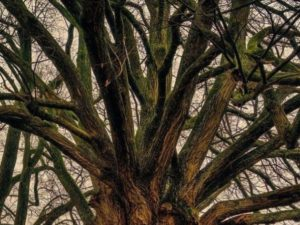 Baumfällung und ihre Vorteile
